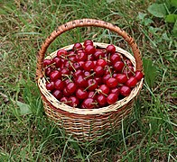 Cherries in basket 2018 G1.jpg