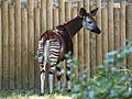 Chester Zoo (22076523112).jpg