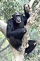 Chhajju Kanpur Zoo.JPG