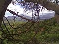 Chinnar wild life sanctuary.jpg