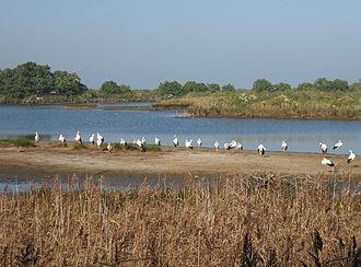 Landes de Gascogne Regional Natural Park - Teich bird sanctuary