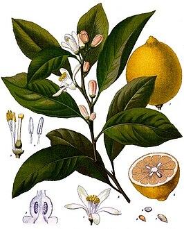 ph del limon pdf