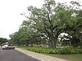 City Park NOLA June 2011 Oak and Playground 2.JPG