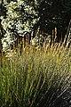 Ciudad del Cabo, Kirstenbosch NBG 27.jpg
