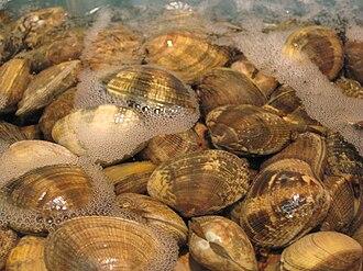 Clam - Edible clams in the family Veneridae