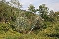 Collodi, Parco di Pinocchio, l'albero degli zecchini 04.jpg