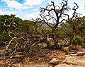 Colorado National Monument (06e55c63-a93e-44b1-9b40-55cf81bbcb44).jpg