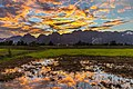 Colorful sky with orange clouds reflecting in the water of a paddy field, at sunset, Vang Vieng, Laos.jpg