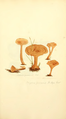 Coloured Figures of English Fungi or Mushrooms - t. 192.png