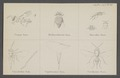 Comys - Print - Iconographia Zoologica - Special Collections University of Amsterdam - UBAINV0274 046 11 0004.tif