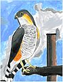 "Copy of art work ""Save our Falcon"" by Diego Irizarry. (5756286026).jpg"