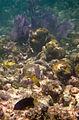 Coral Reef Community (6022419020).jpg