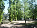 Cotter river picnic area.JPG