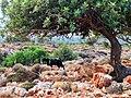 Crete2010 250.jpg