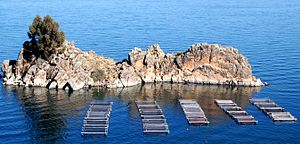 Fish farming on Lake Titicaca.