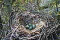 Crow Nest Moscow.jpg
