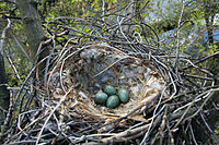 Crow Nest Moscow