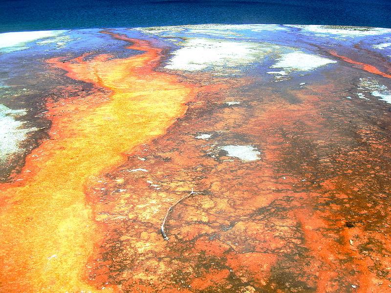 File:Cyanobacteria Biscuit Basin YNP Wyoming USA.JPG