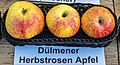 Dülmener Herbstrosen Apfel jm55157.jpg