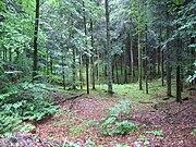 Skog i dödisgrop.