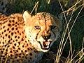 DSC01438 - NAMIBIA 2010 (31107126540).jpg