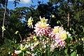 Dahlia @ Parc Floral @ Paris (30122076166).jpg