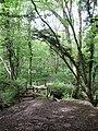 Darwell Wood - geograph.org.uk - 1286206.jpg