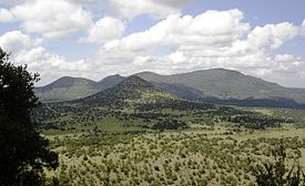 Image taken in the Davis Mountains. The picture is taken from a relatively high elevation and shows a view across a broad valley toward a mountain with a much larger mountain behind. The valley and mountain in the foreground are covered in grasslands with stands of junipers while the higher mountain in the background is mostly wooded.