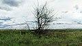 Dead tree - panoramio (5).jpg