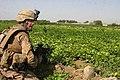 Defense.gov photo essay 090813-M-8109S-001.jpg