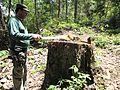 Degradação Florestal Amazônia 25.jpg