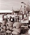 Del nove sušilnice v Kidričevem 1960.jpg