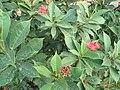Delhi vegetation 22.jpg