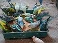 Des oiseaux.jpg