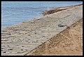 Destruction of Woody Point-08-Large (2923276961).jpg