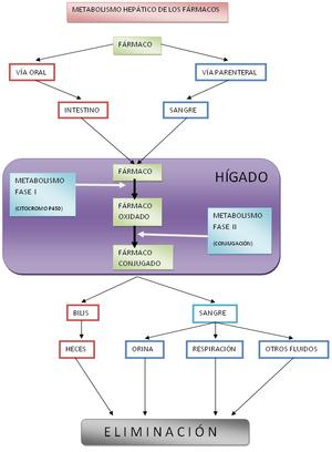 alimentos que se deben comer para el acido urico medicamentos para desinflamar la gota avena acido urico alto