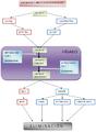 Diagrama Metabolismo hepático.PNG