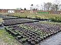 Didlington Nurseries - geograph.org.uk - 396576.jpg