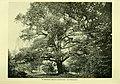 Die Pflanzenwelt (1913-1922.) (20752474410).jpg
