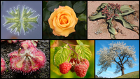Diversity of plants image version q.png