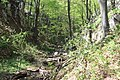 Dolina rečice Perast 19.jpg