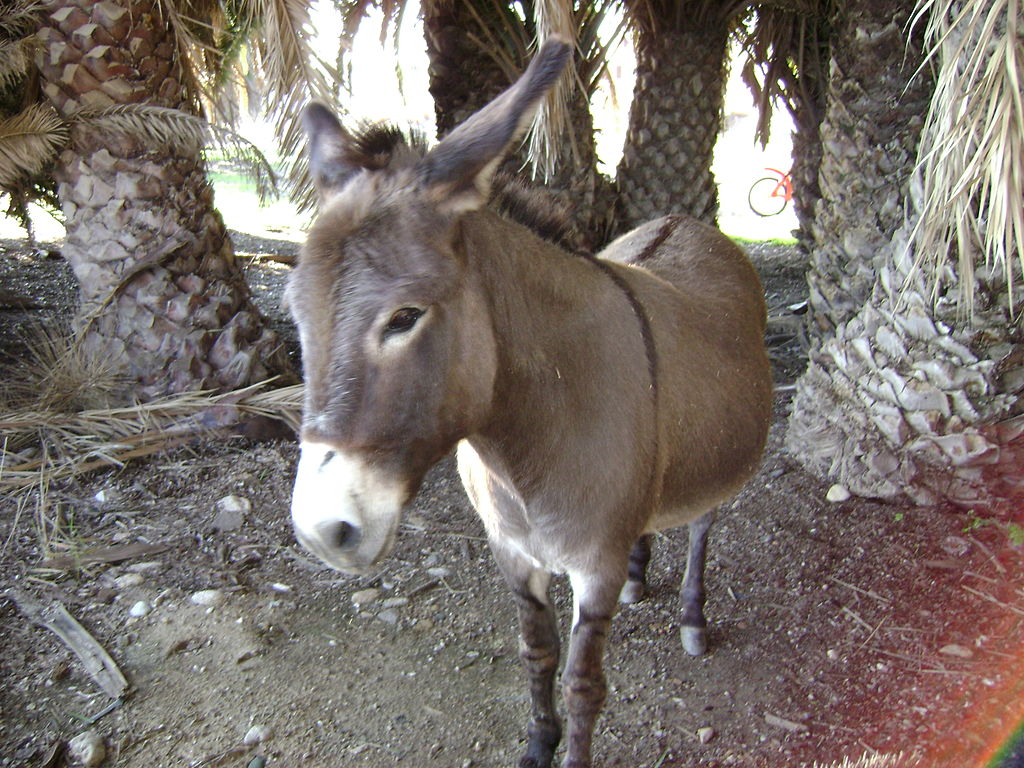 porno sex video girl with donkey