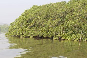 Dr Salim Ali Bird Sanctuary.jpg
