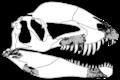 Dracovenator fossils.png