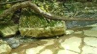 File:Dragonja reka part 11.webm