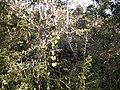 Dry rainforest.jpg