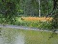 Dunavski park, spomenik prirode, Novi Sad 3.jpg
