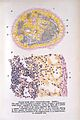 E. A. Schaffer, Text-book of microscopic anatomy Wellcome L0022088.jpg