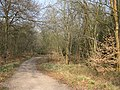 Early April in the forest - geograph.org.uk - 1234662.jpg