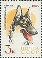 East-European-Shepherd-Canis-lupus-familiaris.jpg